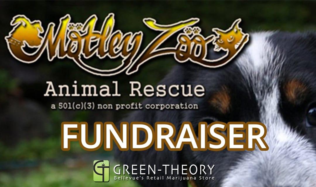 motley-zoo-no-money