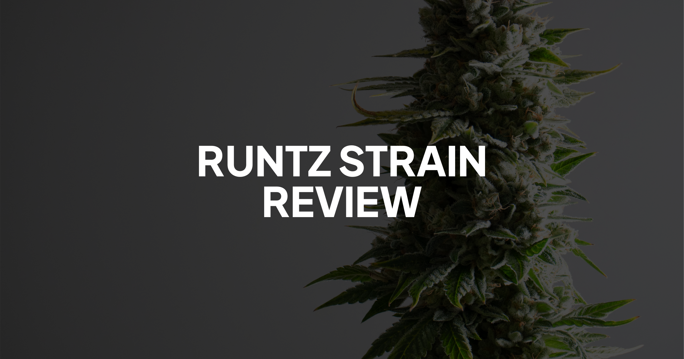Runtz Strain Review