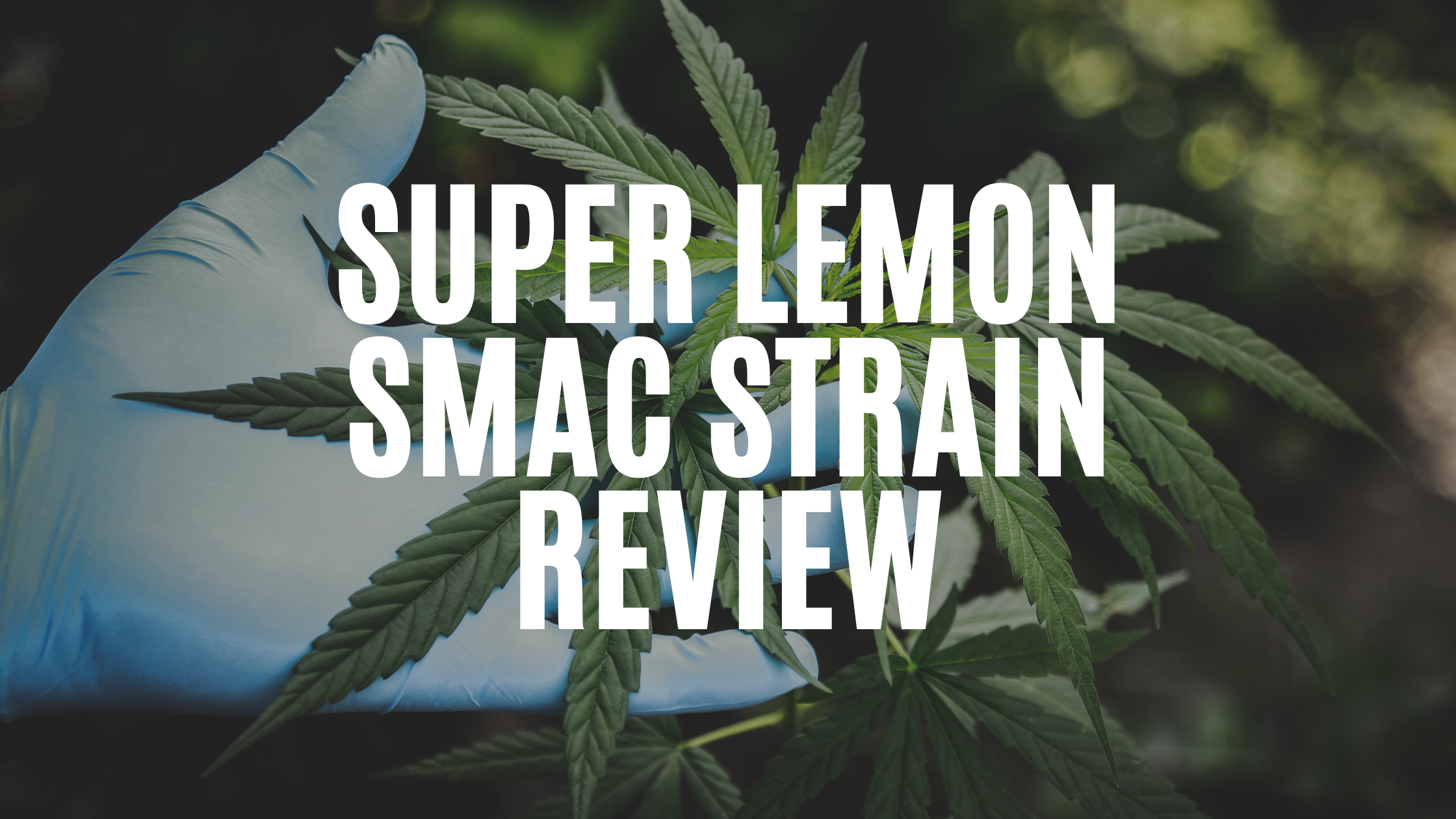super-lemon-smac-strain-review