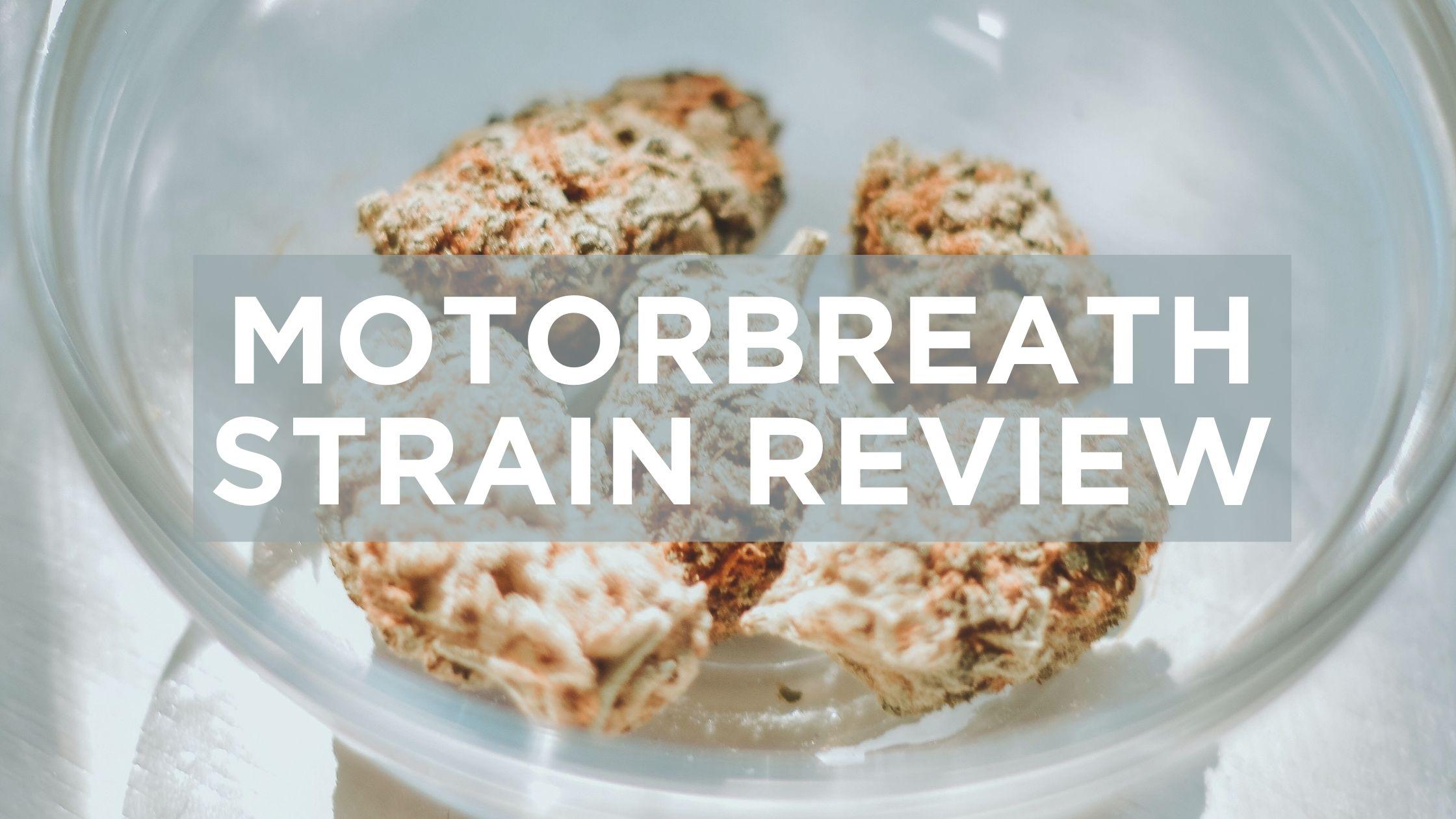 motorhead_strain_review