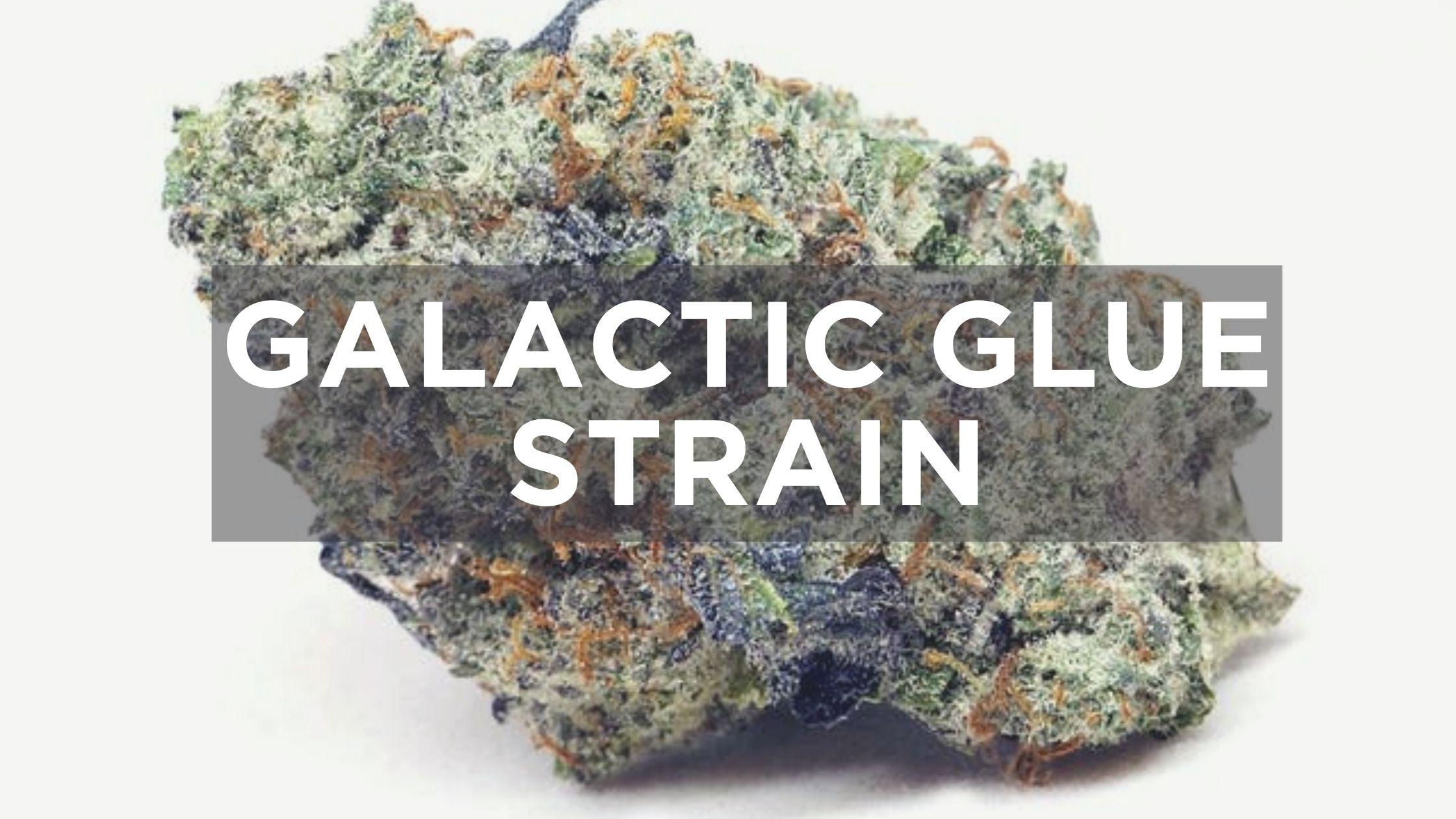 galactic glue strain