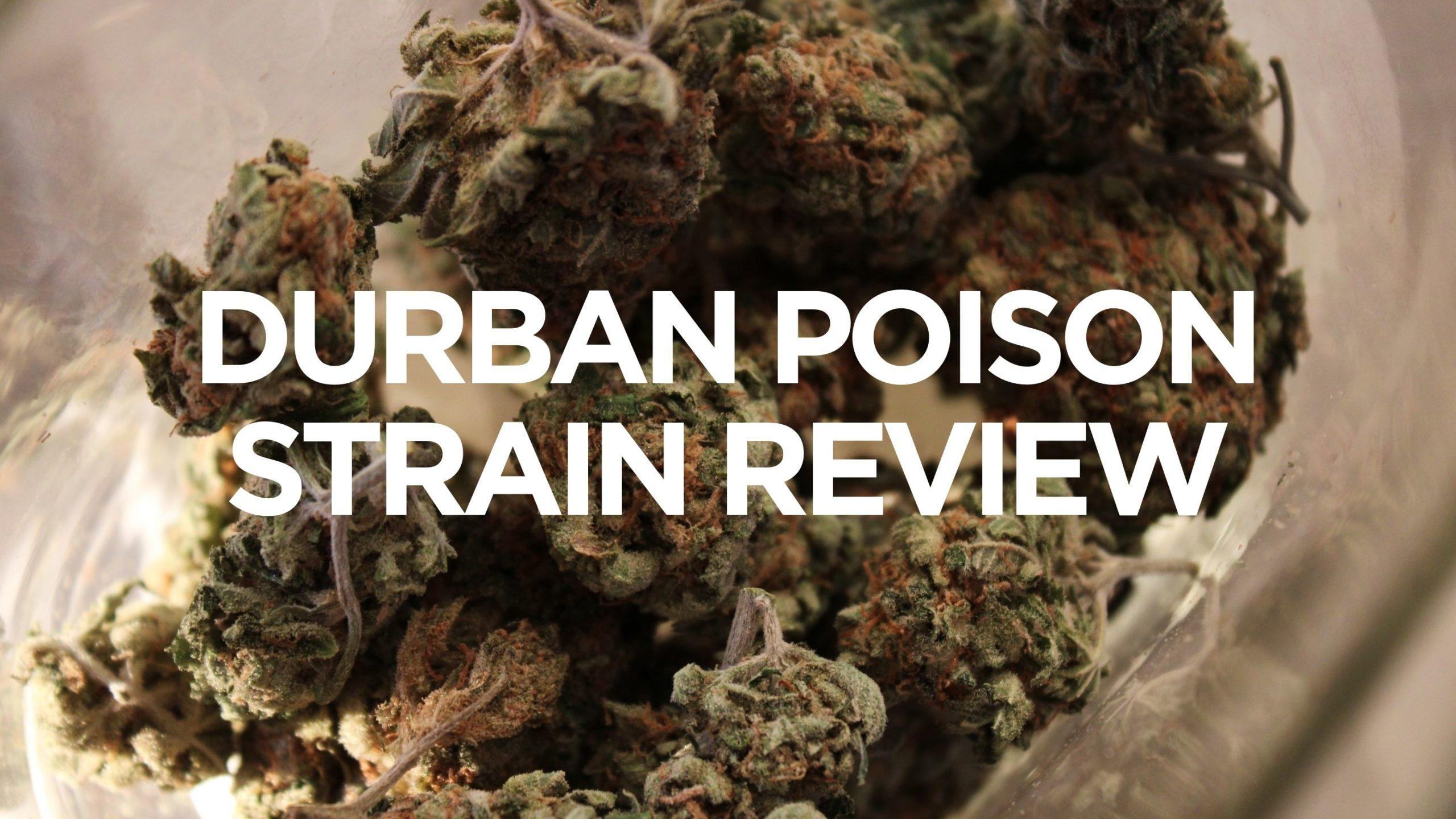 durban-poison'strain-review