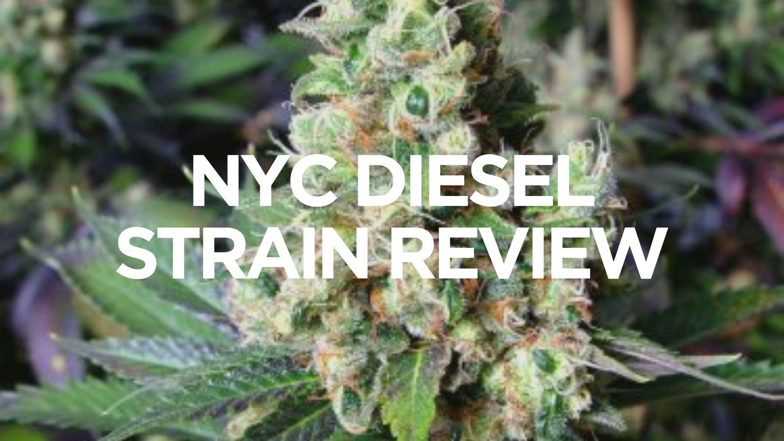 nyc-diesel-strain-review