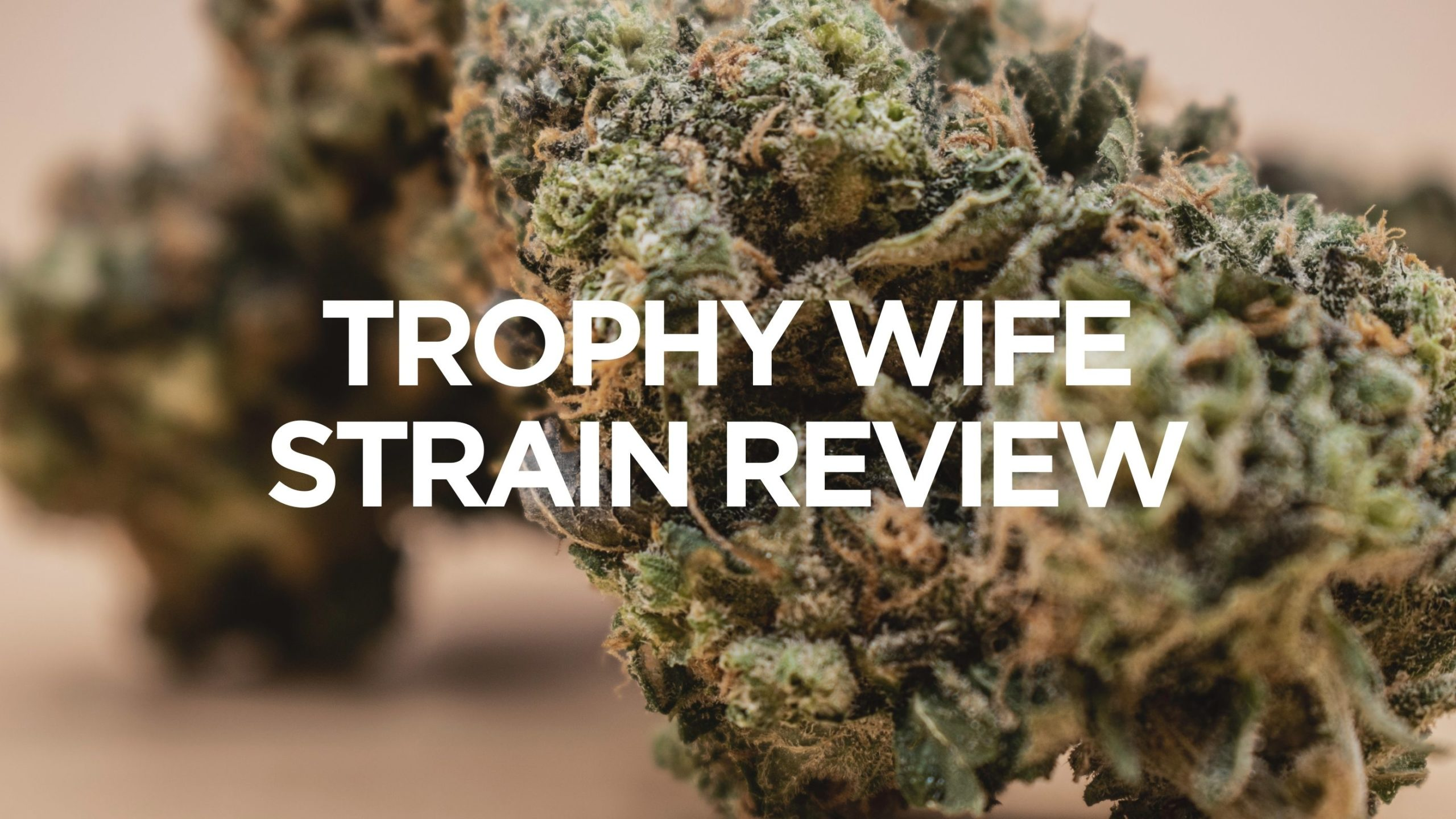trophy-wife-strain-review
